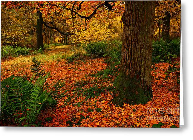 Trees In Autumn Woodland Greeting Card