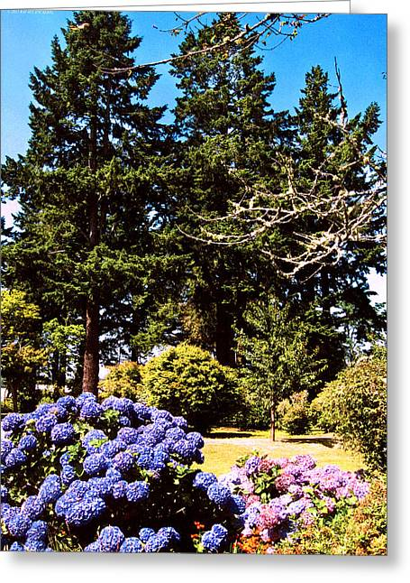Trees In Brookings Oregon Greeting Card by Rafael Escalios