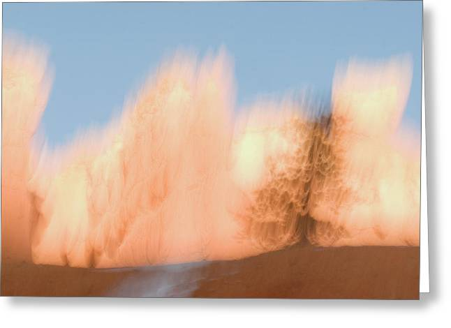 Trees In Bryce Canyon National Park Greeting Card by Phil Schermeister