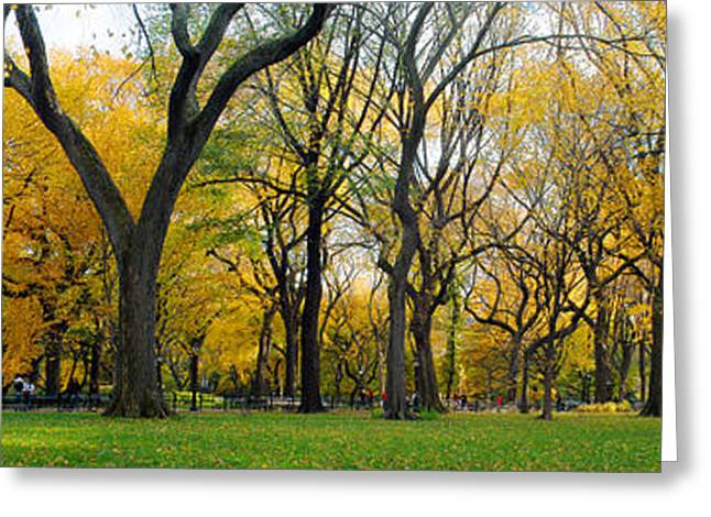 Greeting Card featuring the photograph Trees In Central Park by Yue Wang