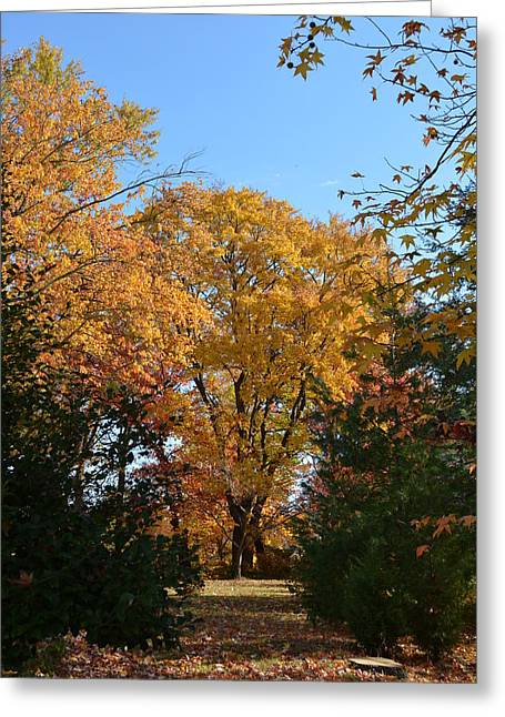 Trees In Fall Greeting Card