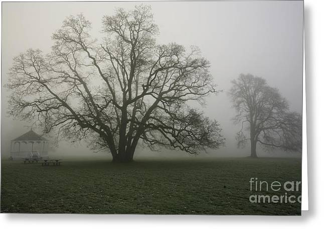 Trees In Fog Greeting Card by Rich Collins
