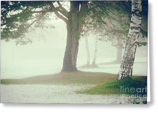 Greeting Card featuring the photograph Trees In Fog by Silvia Ganora
