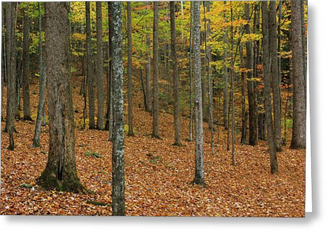 Trees In Forest, Smoky Mountains Greeting Card