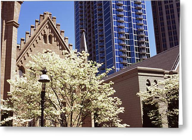Trees In Front Of A Building Greeting Card