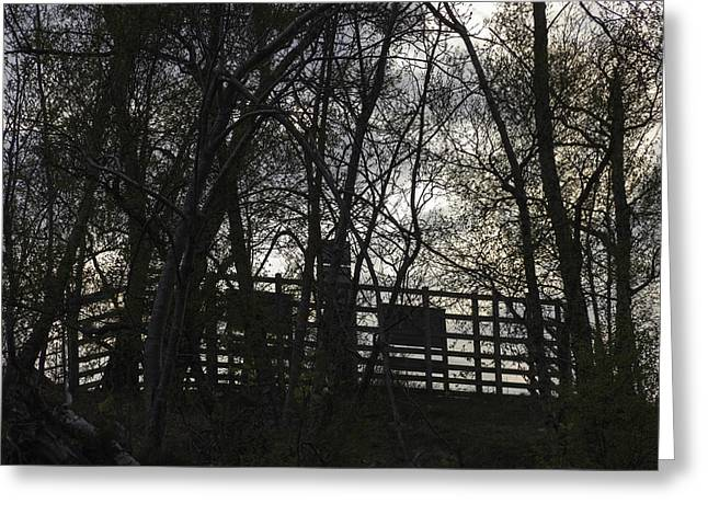 Trees In Front Of A Wooden Fence On A Higher Level Greeting Card by Ashish Agarwal