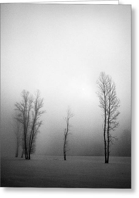 Trees In Mist Greeting Card by Davorin Mance