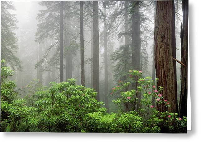 Trees In Misty Forest Greeting Card by Panoramic Images