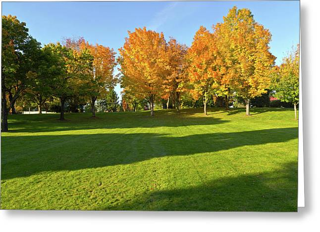 Trees In Public Park, Gresham Greeting Card by Panoramic Images