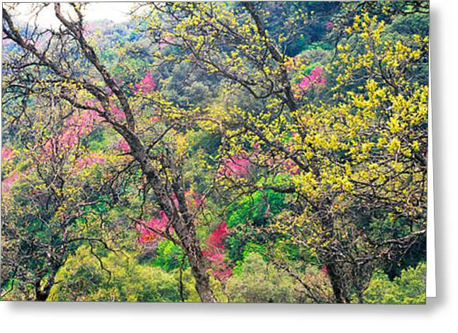 Trees In Springtime, California, Usa Greeting Card by Panoramic Images