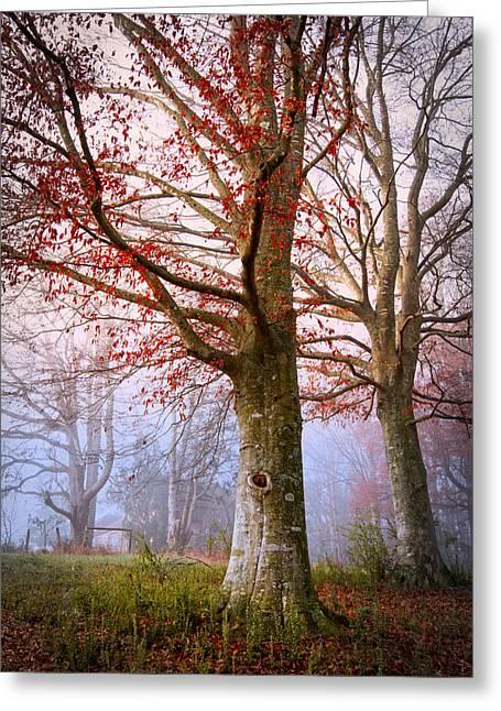 Trees In The Fog Greeting Card by Debra and Dave Vanderlaan