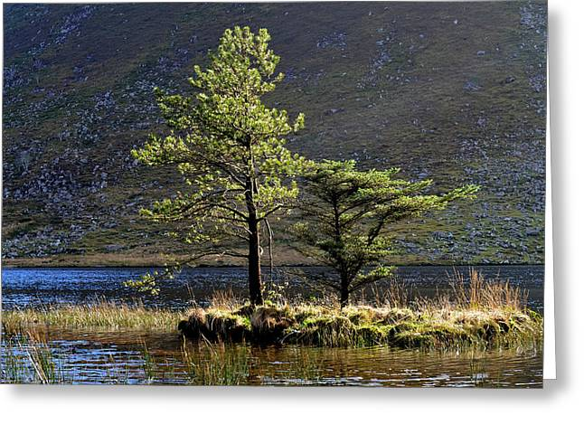 Trees In The Lake Greeting Card by Barbara Walsh