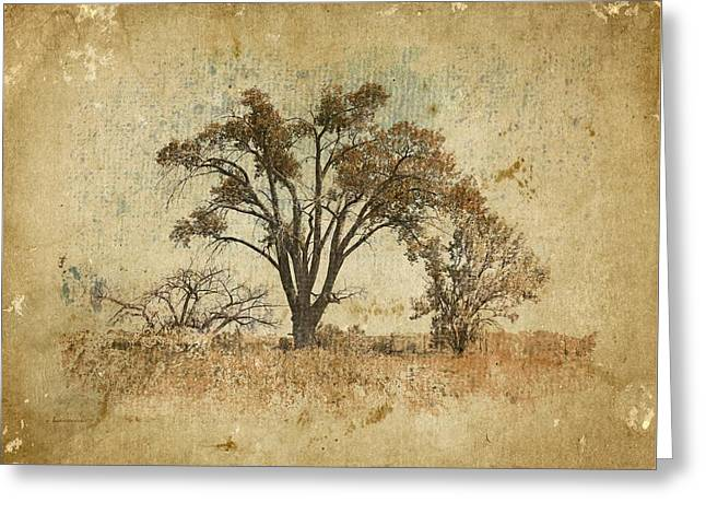 Trees In The Lowland Greeting Card