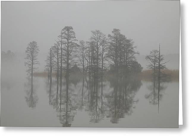 Trees In The Mist  Greeting Card by Claude McCoy