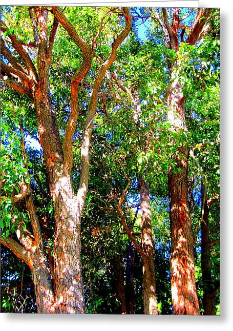 Trees In The Nearby Bush Greeting Card