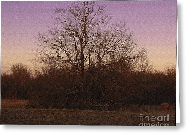 Trees In The Setting Sun Greeting Card by R McLellan