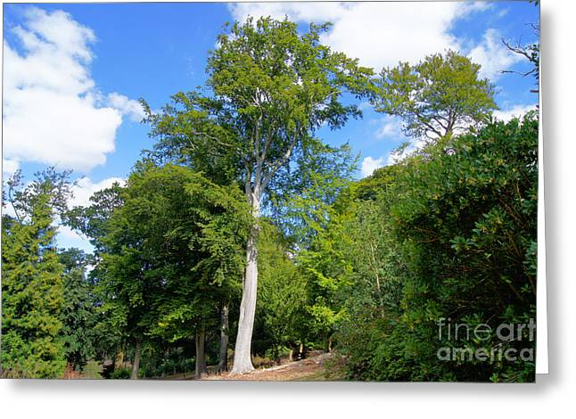 Trees In The Sky Greeting Card by Jonathan Steward