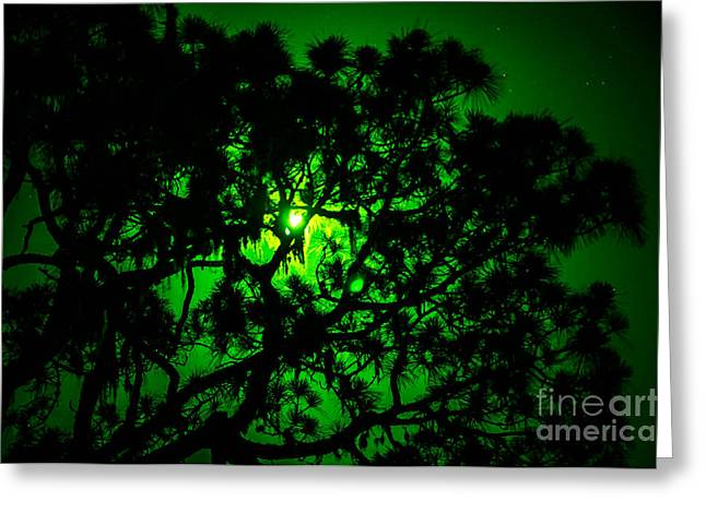 Trees In The Super Moon Greeting Card