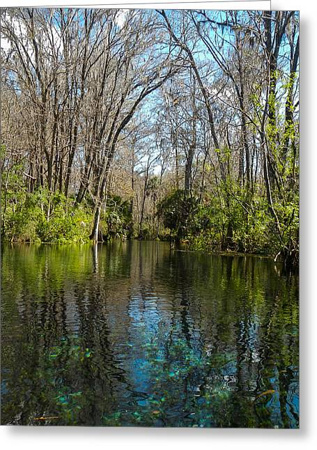Trees In Water Greeting Card