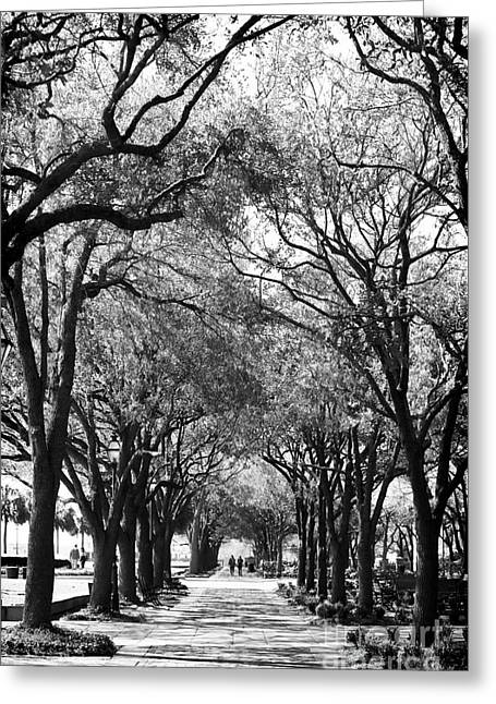 Trees In Waterfront Park Greeting Card by John Rizzuto