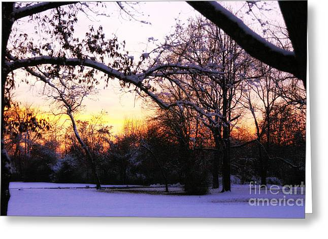 Trees In Wintry Pennsylvania Twilight Greeting Card by Anna Lisa Yoder