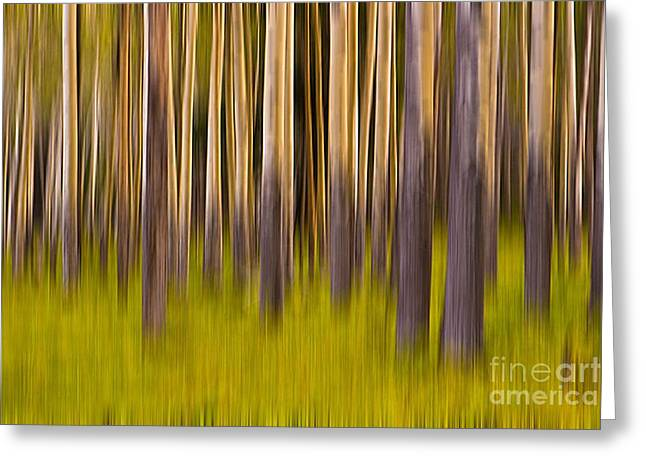 Trees Greeting Card by Jerry Fornarotto