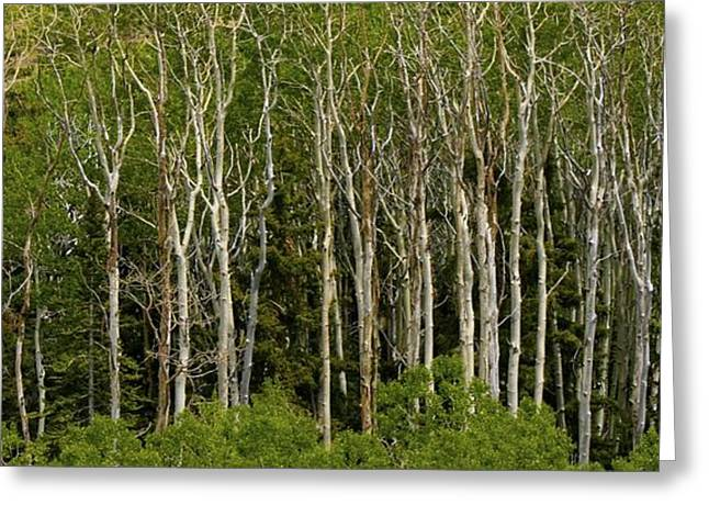 Trees Greeting Card by Kimberly Oegerle