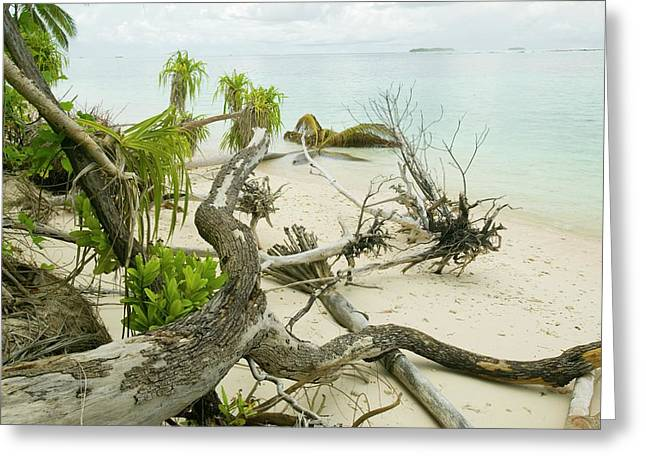 Trees Knocked Down On Tuvalu Greeting Card by Ashley Cooper