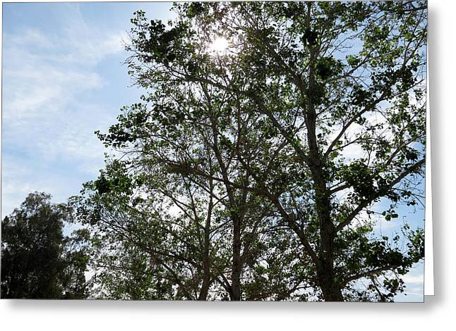 Trees At The Park Greeting Card by Laurel Powell