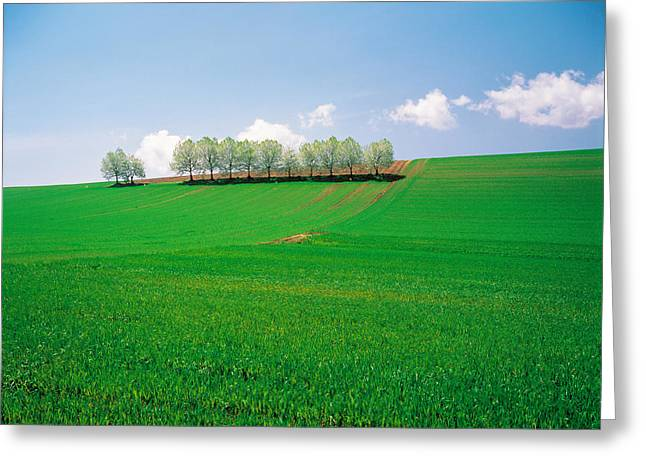 Trees Lined In Crop Field With Sky Greeting Card