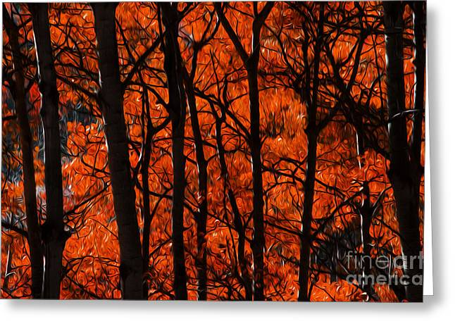 Trees Of Autumn Greeting Card by Bob Christopher