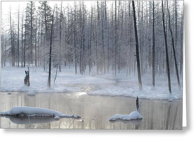 Trees Of Winter Greeting Card