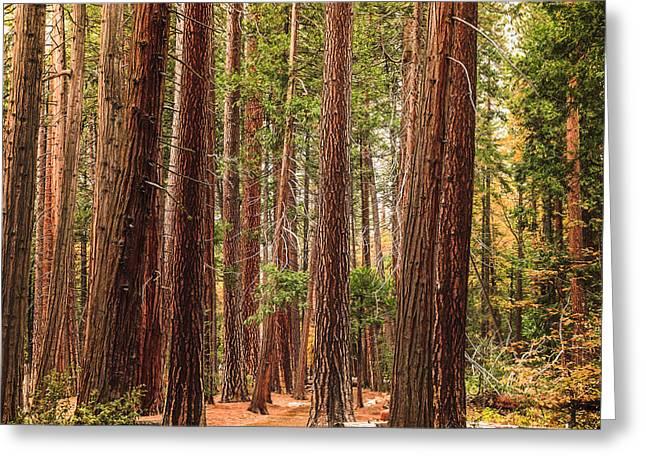 Trees Of Yosemite Greeting Card by Muhie Kanawati