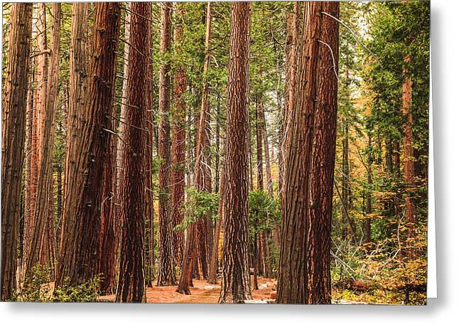 Trees Of Yosemite Greeting Card