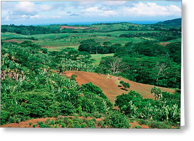 Trees On A Hill, Chamarel, Mauritius Greeting Card by Panoramic Images