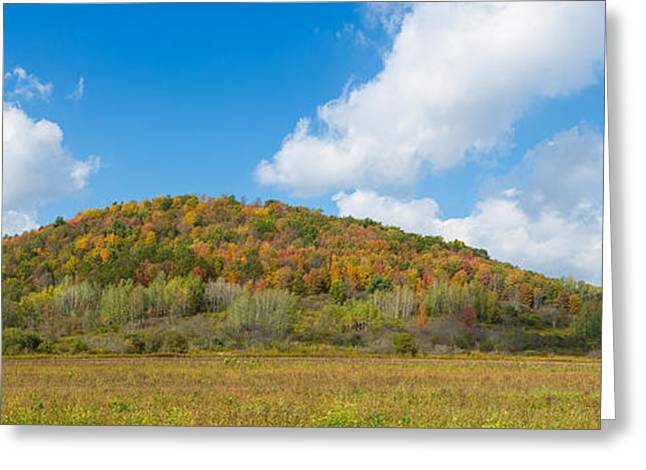 Trees On A Hill, Humphrey Road Greeting Card by Panoramic Images