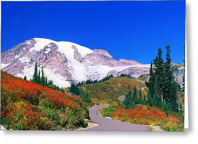 Trees On A Hill, Mt Rainier, Mount Greeting Card by Panoramic Images