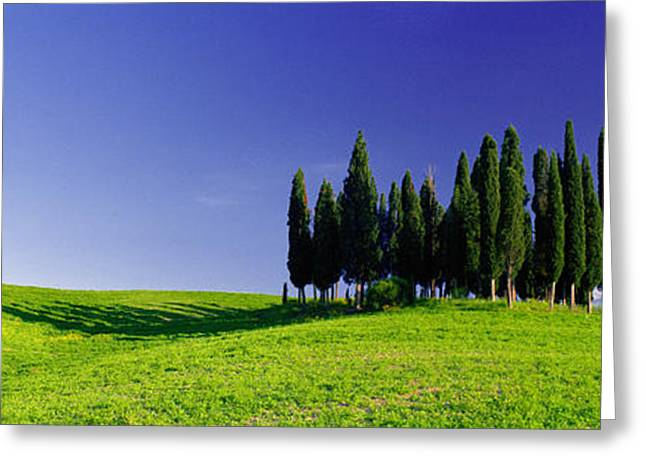 Trees On A Landscape, Val Dorcia, Siena Greeting Card by Panoramic Images