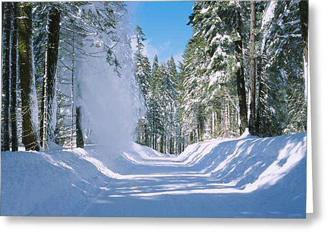 Trees On Both Sides Of A Snow Covered Greeting Card