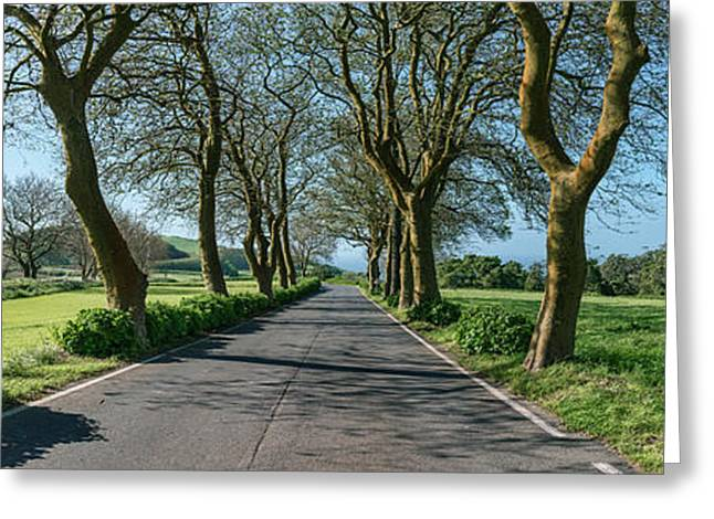 Trees On Both Sides Of Road, Sao Miguel Greeting Card