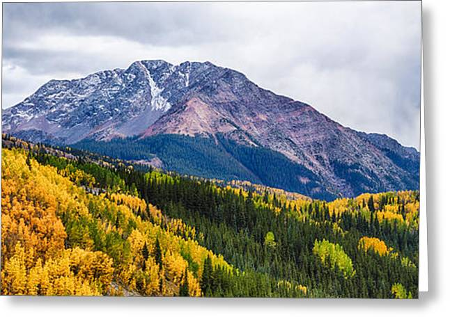 Trees On Mountains, San Juan National Greeting Card by Panoramic Images