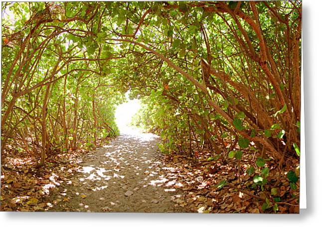 Trees On The Entrance Of A Beach Greeting Card by Panoramic Images