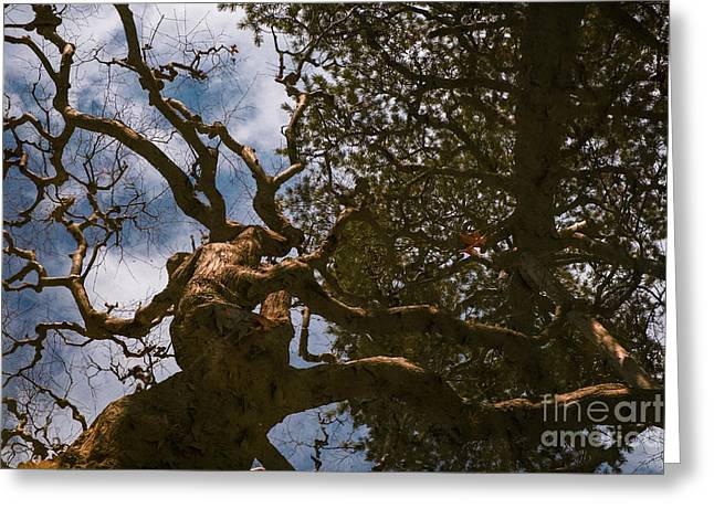 Trees Reflected In The Ancient Temple Pond Greeting Card by Dean Harte