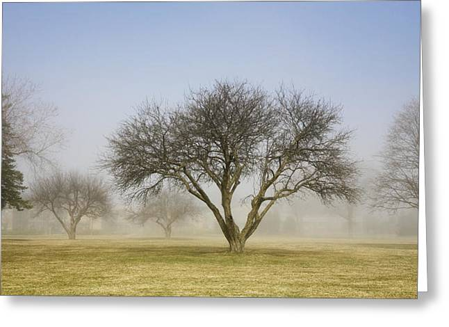 Trees Shrouded In Mist In Springtime Greeting Card