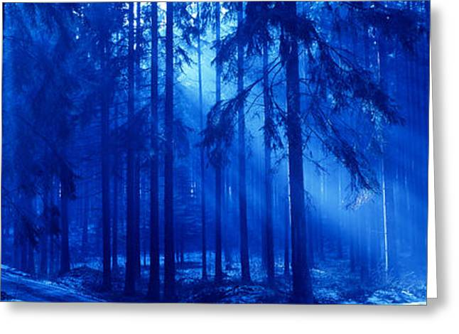 Trees Titisee Germany Greeting Card by Panoramic Images