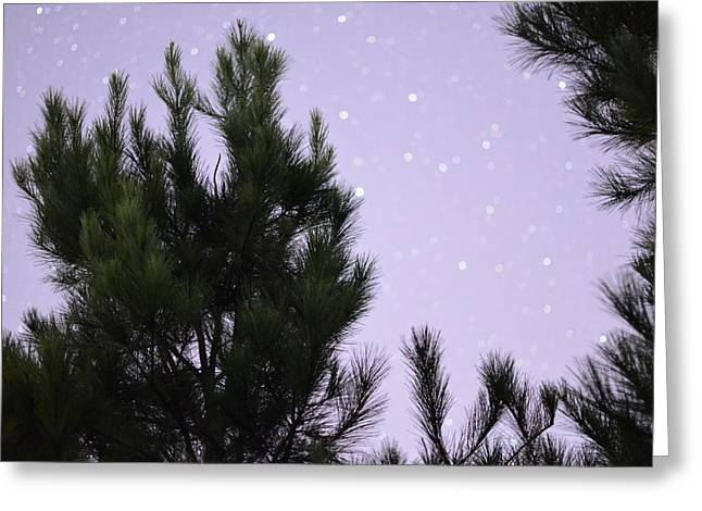 Trees Under The Stars Greeting Card by David Morefield