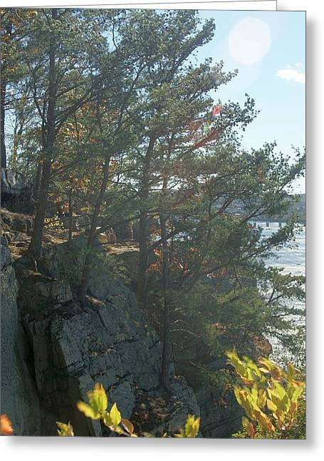 Trees Up Out Of Rock Greeting Card by Rob Luzier