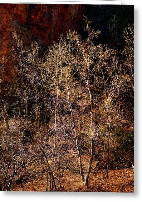 Greeting Card featuring the photograph Trees West Fork Trail by Bob Coates