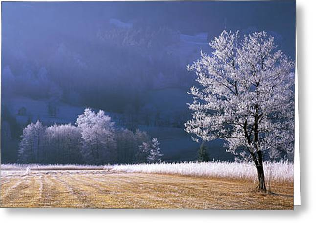 Trees With Frost, Franstanz, Tyrol Greeting Card by Panoramic Images