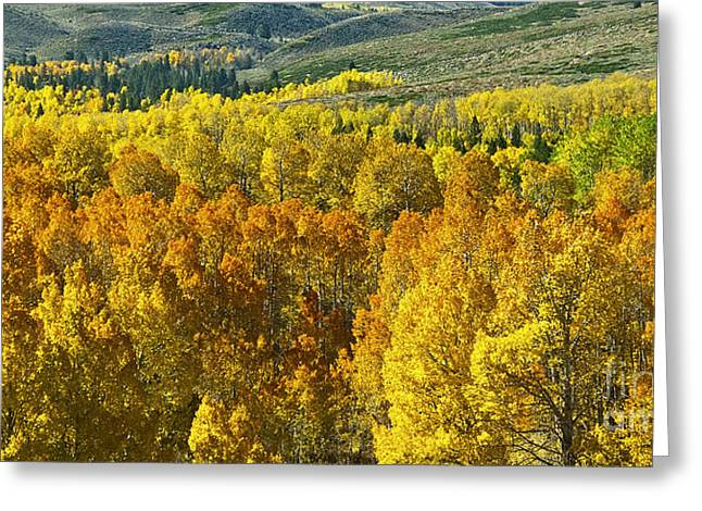 Tri Color Aspen Greeting Card